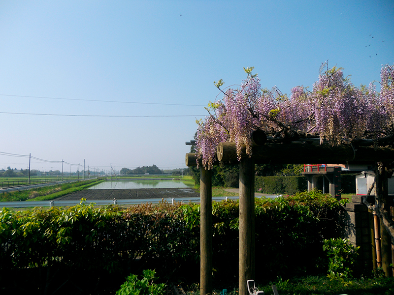 The private garden of Takakazu Nozawa